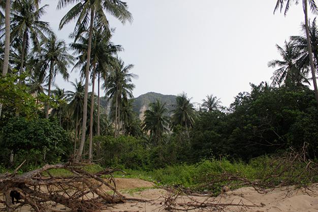 Adentrarnos en la selva