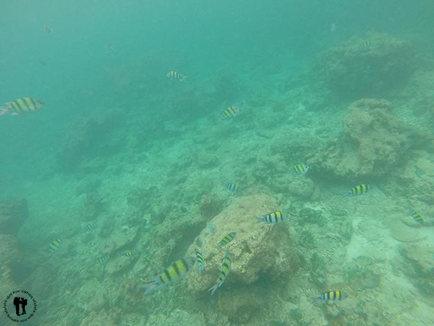 Un poco de snorkel