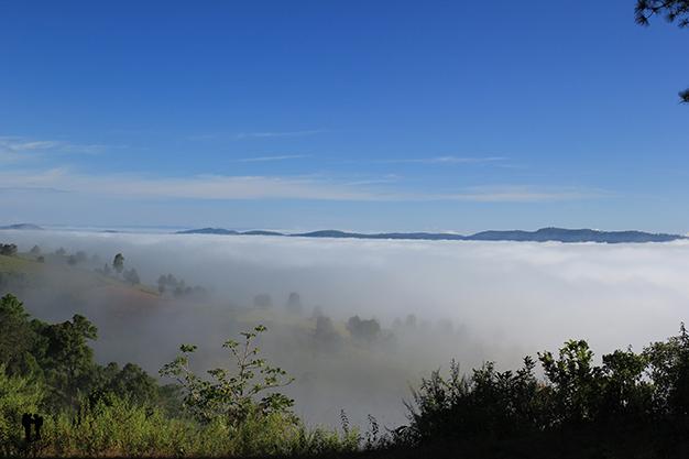 Neblina de la mañana cubriendo los campos de arroz