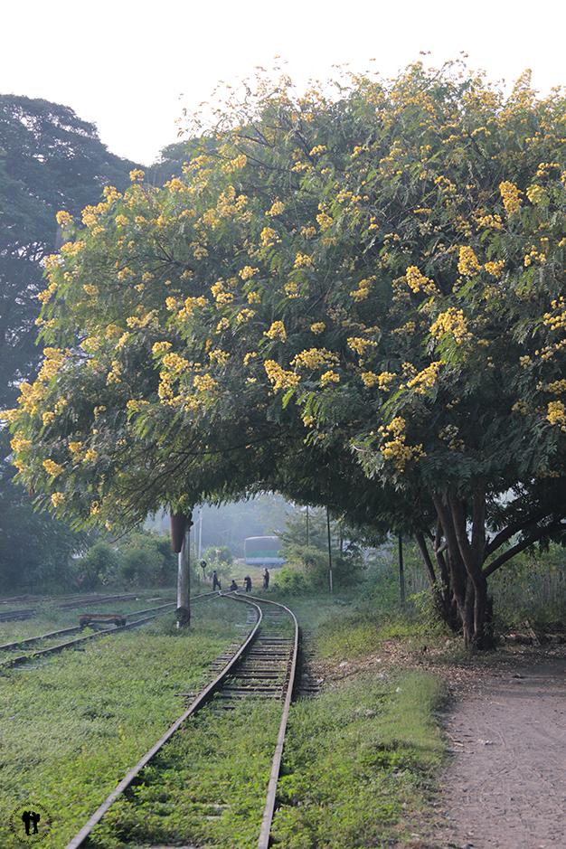Vía del tren dirección Mandalay, a primera hora