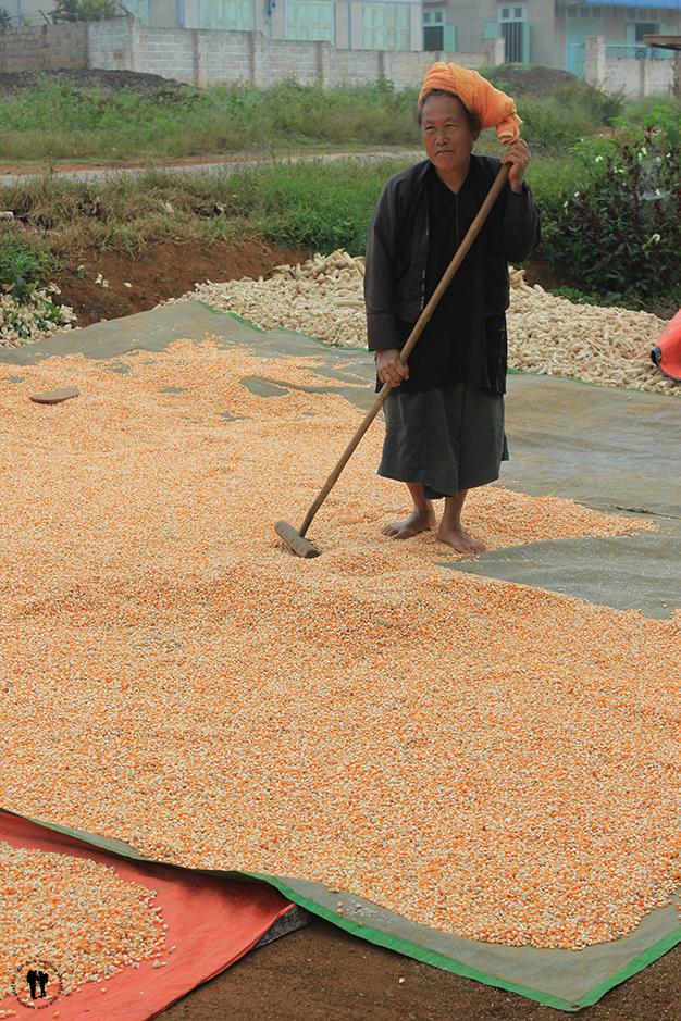 Mujer de la tribu Pao secando granos de maíz