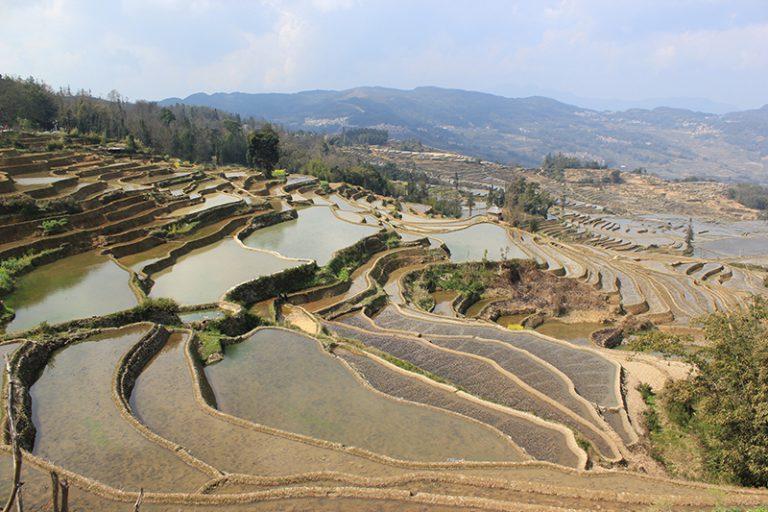Bancales del Yuanyang