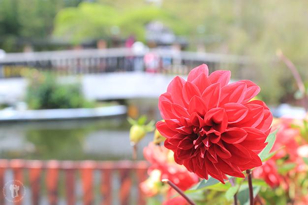 Jardín de Tanah Rata