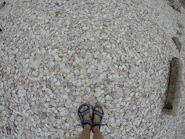 Playa de conchas
