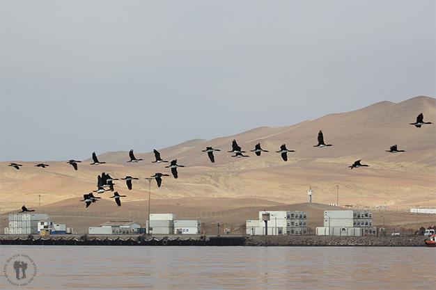Aves sobrevolando el mar