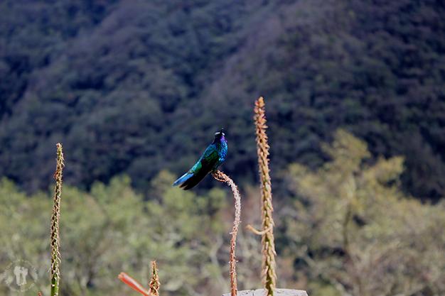 Captura de un precioso Colibri