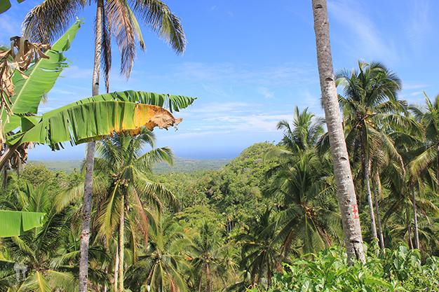 Entre densos bosques de palmera