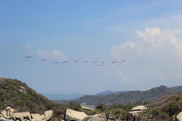 Aves en Parque Natural Nacional Tayrona