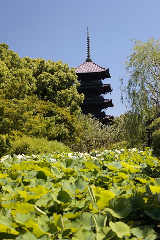 Templo budista Toji