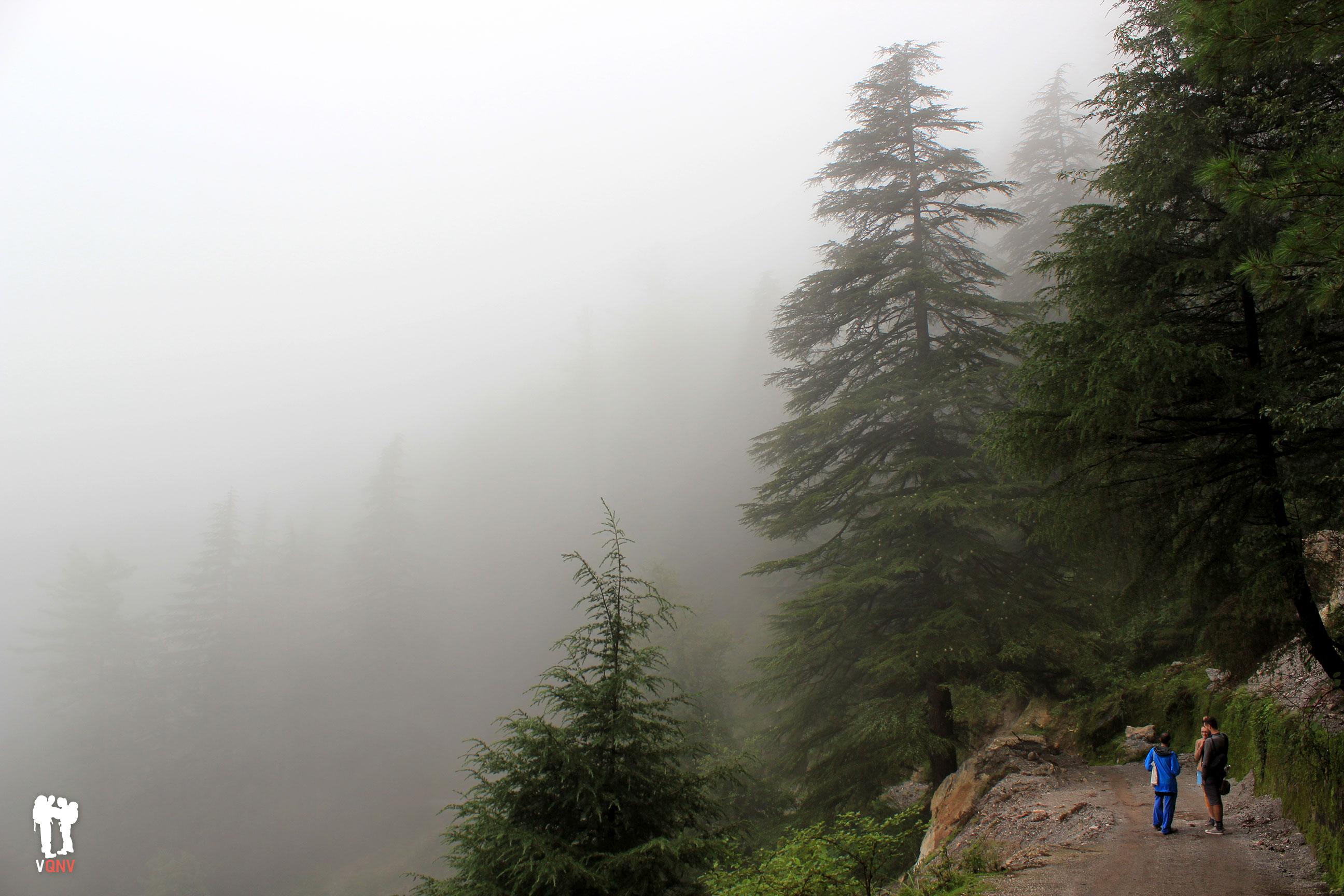 Ruta por las alturas de Dharamkot