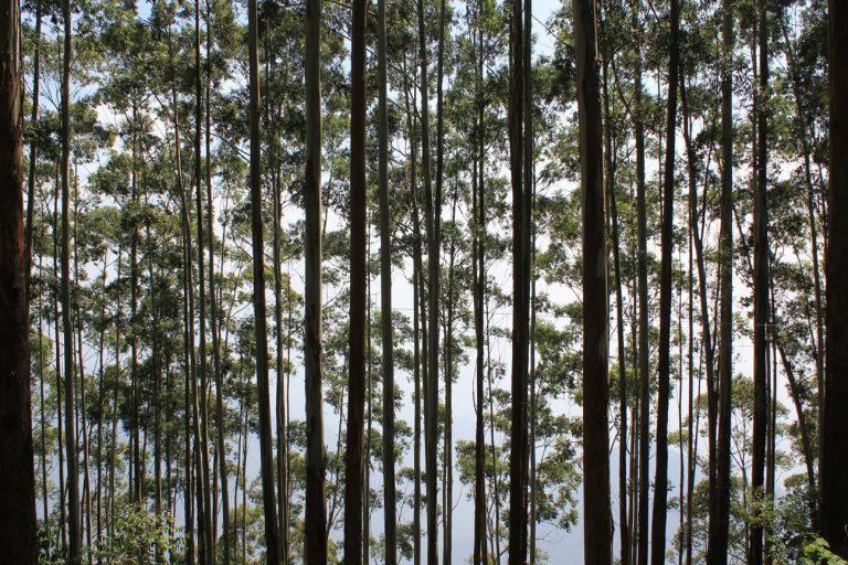 Bosque en Kodaikanal