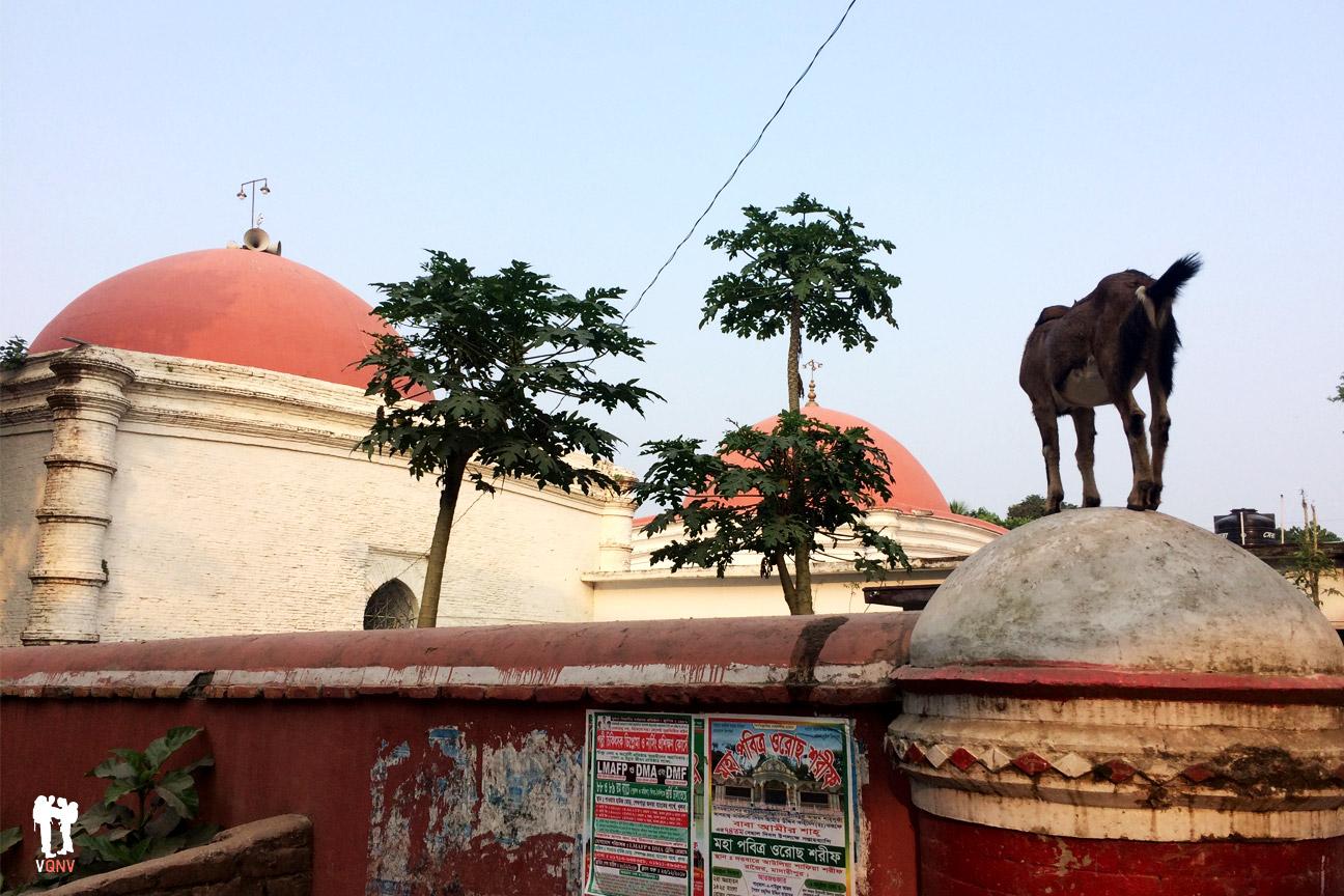 Cabra en la tumba de Kan Jahan Alí