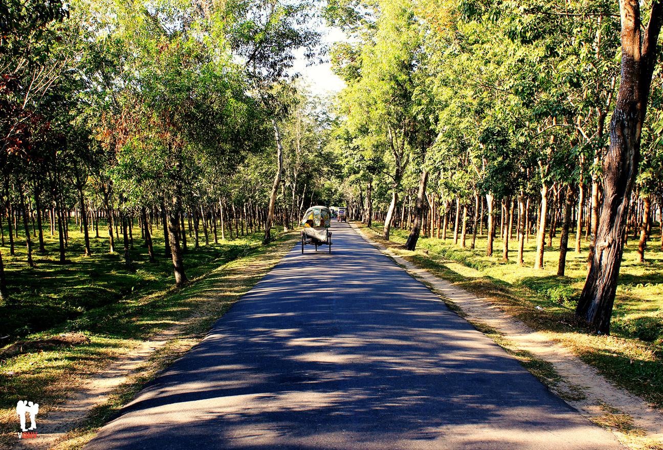 Caminando por los alrededores de Srimangal