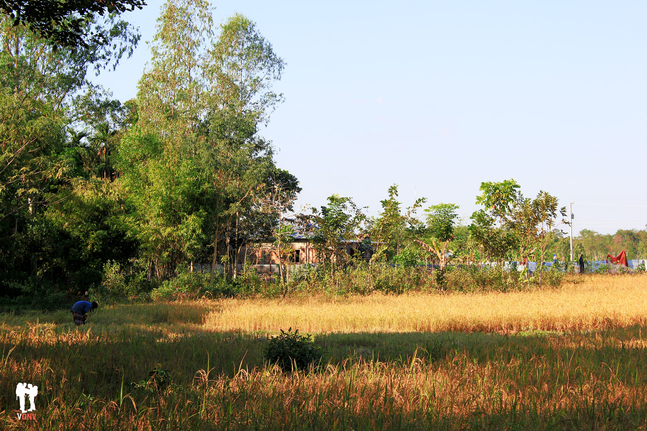 Vida rural en Srimangal